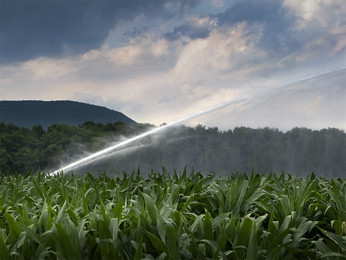 watering corn field