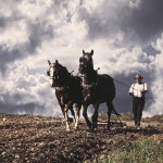 horsedrawn_plow_BEST_WEBSITE