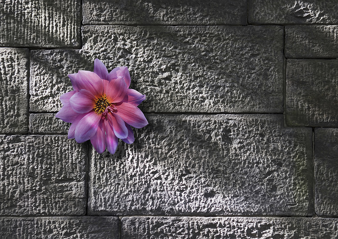 Flower on Stone