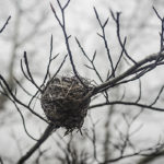 Nest at Huyck Preserve