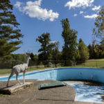 Deer at No Swimming Pool
